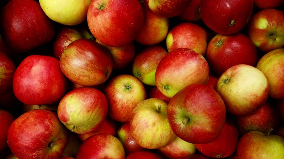Delicious local apples are coming in thick and fast!